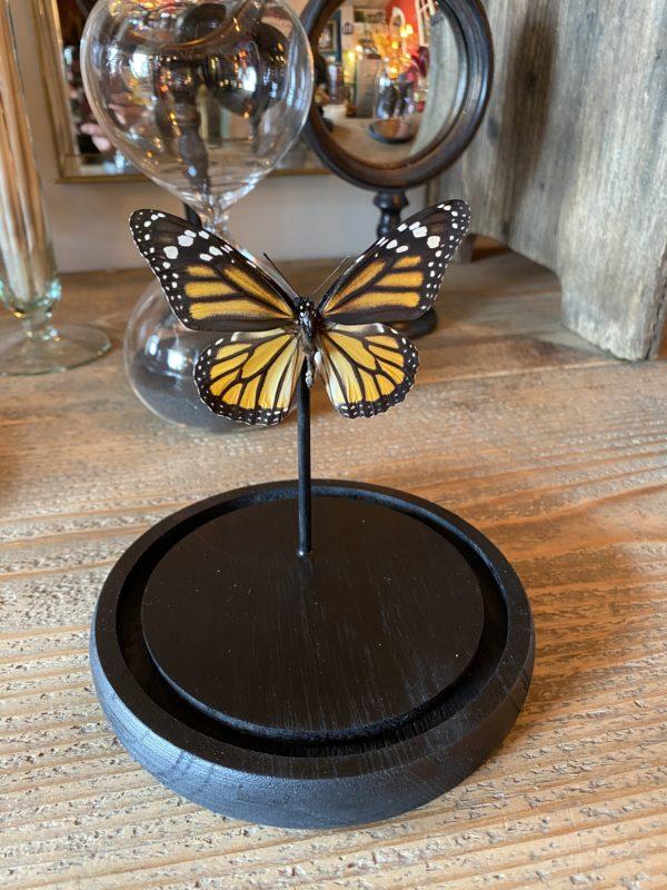 Papillon Danaus atropos cerise noire